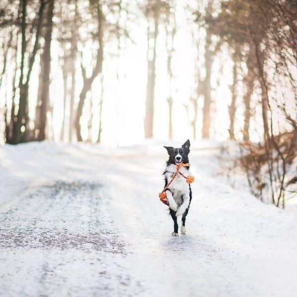 Honden ook welkom bij de Mallejan